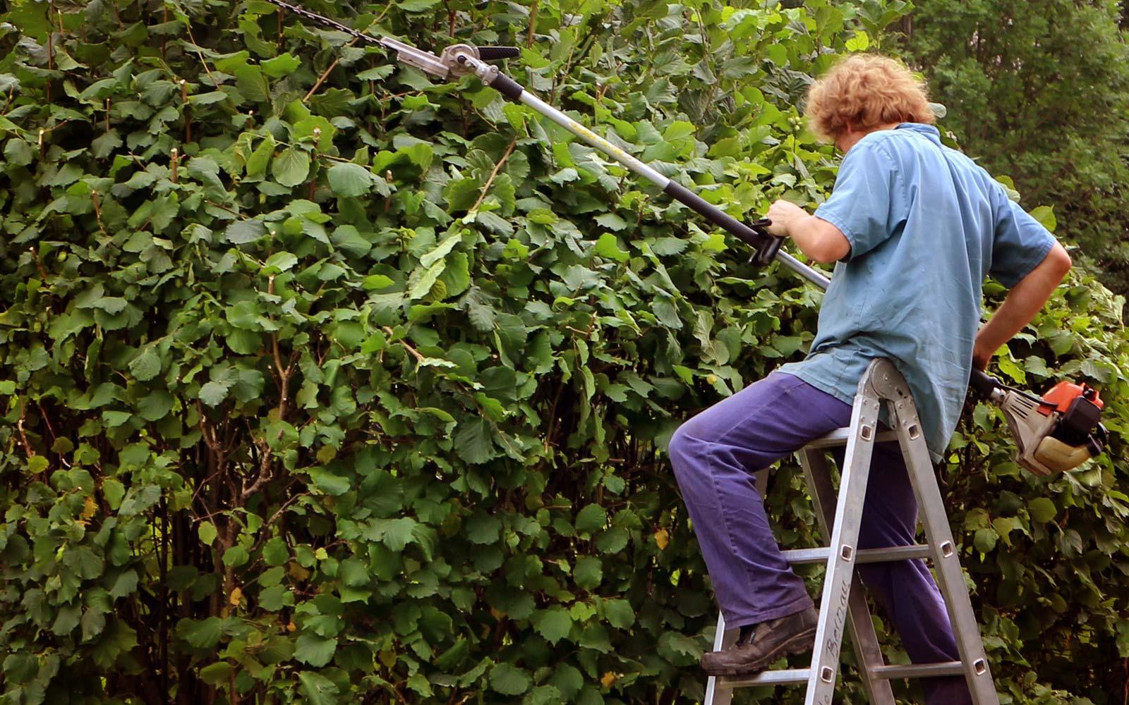 Pielęgnacja ogrodów w Białymstoku - Formowanie żywopłotu