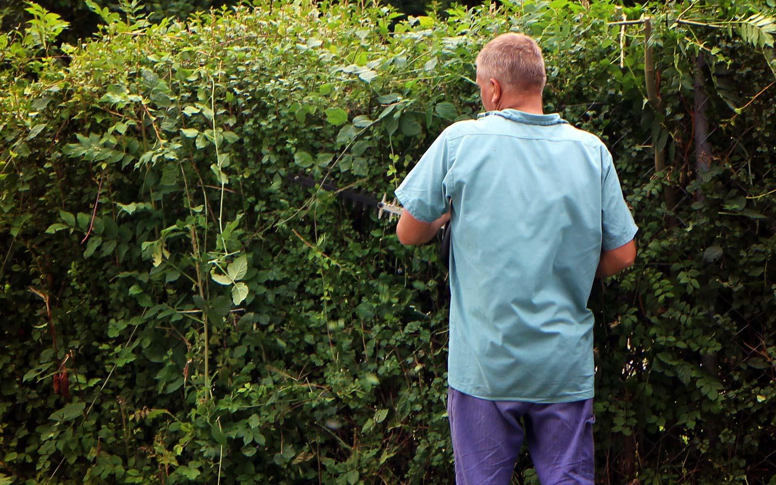 Pielęgnacja ogrodów w Białymstoku - Przycinanie zywopłotów